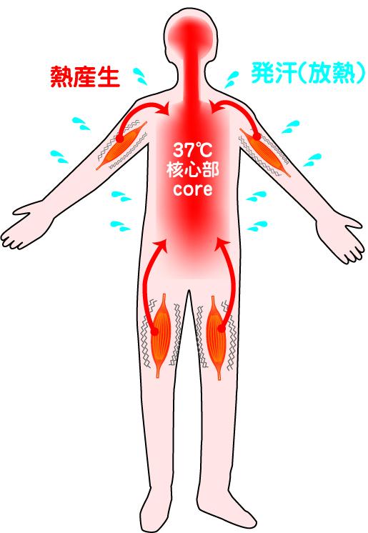 熱 を すぐ に 下げる 方法